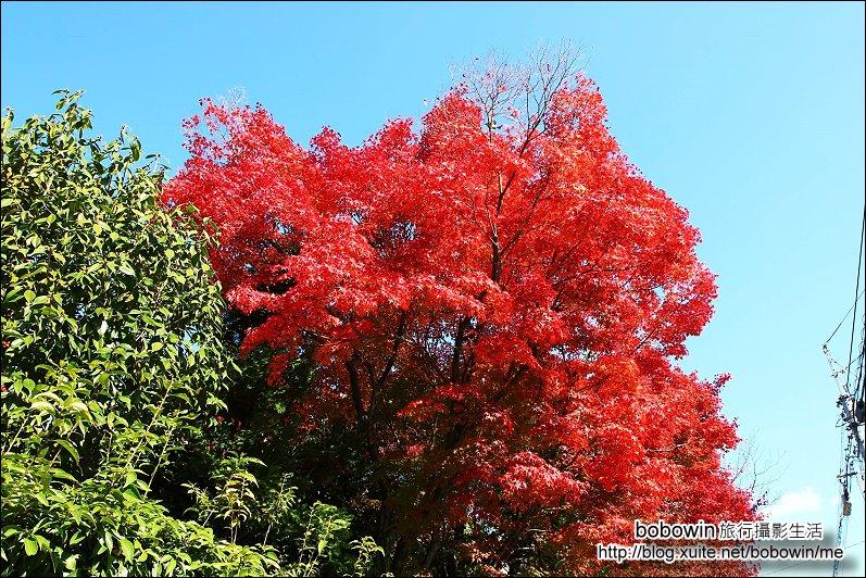 京都:嵐山02.jpg