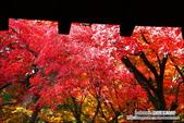 京都:東福寺03.jpg