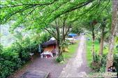 新竹尖石油羅溪森林:DSC08074.JPG