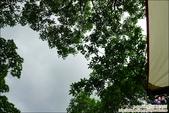 新竹尖石油羅溪森林:DSC07912.JPG