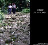 2009.04.30 大艽芎古道賞桐花:DSCF2012.JPG