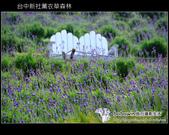 [ 台中 ] 新社薰衣草森林--薰衣草節:DSCF6505.JPG