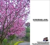 苗栗獅潭蓮臺山賞櫻:DSC_5071.JPG