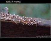 [ 北橫 ] 桃園復興鄉拉拉山森林遊樂區:DSCF7828.JPG