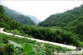 新竹尖石油羅溪森林:DSC07910.JPG