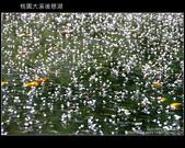 [ 北橫 ] 桃園大溪後慈湖:DSCF5074.JPG