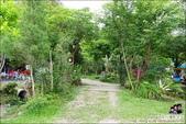 新竹尖石油羅溪森林:DSC07935.JPG