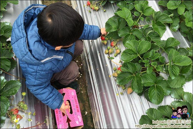 苗栗馬拉邦山採草莓:IMG_4238.JPG