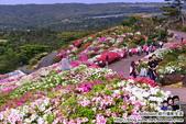Okinawa Day3:DSC_0194.JPG