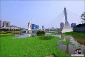 桃園青塘園生態公園:DSC_2486.JPG