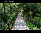 桃園復興鄉三民蝙蝠洞:DSCF4882.JPG