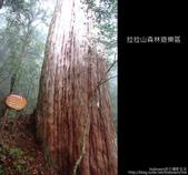 [ 北橫 ] 桃園復興鄉拉拉山森林遊樂區:DSCF7855.JPG