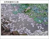 2012.04.29 苗栗桐花公園花況:DSC_1791.JPG