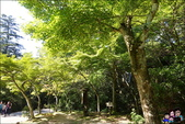 宮島一日遊 彌山攻頂:DSC_2_1185.JPG