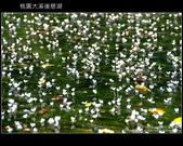 [ 北橫 ] 桃園大溪後慈湖:DSCF5079.JPG