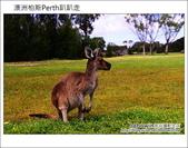 HEIRISSON ISLAND 澳洲伯斯袋鼠島:DSC_0197.JPG