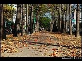 20080213_台南東豐路:DSC_2972.jpg