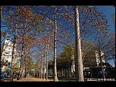 20080213_台南東豐路:DSC_2973.jpg