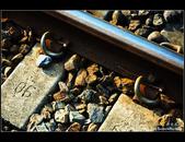 平溪鐵道之旅:DSC_1998.jpg