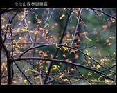 [ 北橫 ] 桃園復興鄉拉拉山森林遊樂區:DSCF7960.JPG