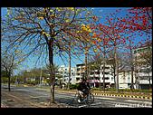 20080213_台南東豐路:DSC_3955.jpg