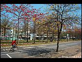 20080213_台南東豐路:DSC_3957.jpg