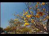 20080213_台南東豐路:DSC_3962.jpg