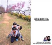 苗栗銅鑼環保公園 鞭炮花 賞櫻:DSC_3899.JPG