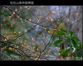[ 北橫 ] 桃園復興鄉拉拉山森林遊樂區:DSCF7961.JPG