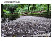 2012.04.29 苗栗桐花公園花況:DSC_1778.JPG