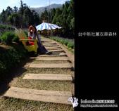 [ 台中 ] 新社薰衣草森林--薰衣草節:DSCF6470.JPG