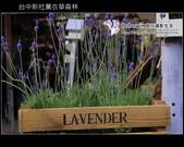 [ 台中 ] 新社薰衣草森林--薰衣草節:DSCF6708.JPG