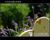 [ 台中 ] 新社薰衣草森林--薰衣草節:DSCF6475.JPG