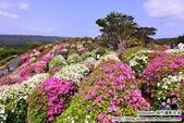 Okinawa Day3:DSC_0223.JPG