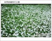 2012.04.29 苗栗桐花公園花況:DSC_1749.JPG