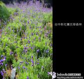 [ 台中 ] 新社薰衣草森林--薰衣草節:DSCF6593.JPG