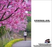 苗栗獅潭蓮臺山賞櫻:DSC_5085.JPG
