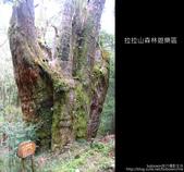 [ 北橫 ] 桃園復興鄉拉拉山森林遊樂區:DSCF7889.JPG