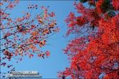 京都:三千院02.jpg