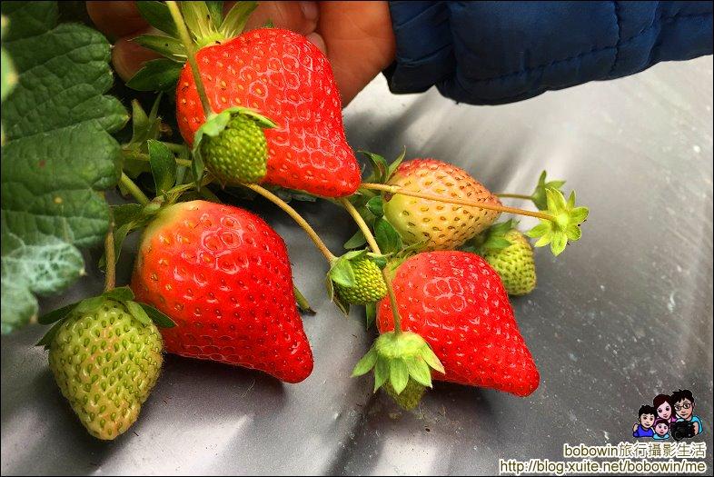 苗栗馬拉邦山採草莓:IMG_4241.JPG