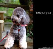 [ 景觀餐廳 ] 新竹尖石六號花園:DSCF0532.JPG