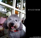 [ 景觀餐廳 ] 新竹尖石六號花園:DSCF0534.JPG