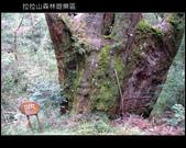 [ 北橫 ] 桃園復興鄉拉拉山森林遊樂區:DSCF7893.JPG