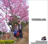 苗栗獅潭蓮臺山賞櫻:DSC_5151.JPG