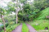 新竹尖石油羅溪森林:DSC08083.JPG