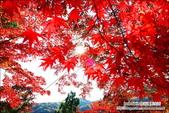 京都:天龍寺023.jpg
