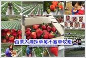 大湖草莓路線:大湖採草莓_samll.jpg