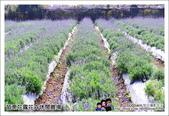 苗栗花露花卉農場:DSC_7229.JPG