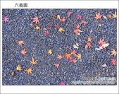 日本東京之旅 Day4 part6 六義園:DSC_0815.JPG