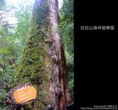 [ 北橫 ] 桃園復興鄉拉拉山森林遊樂區:DSCF7898.JPG